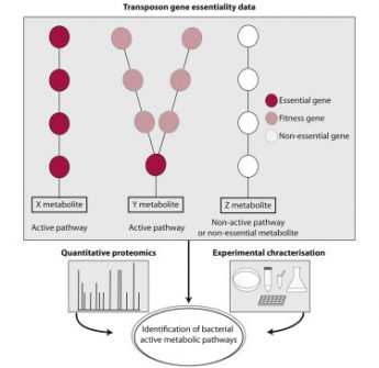 Inferring Active Metabolic Pathways from Proteomics and Essentiality Data
