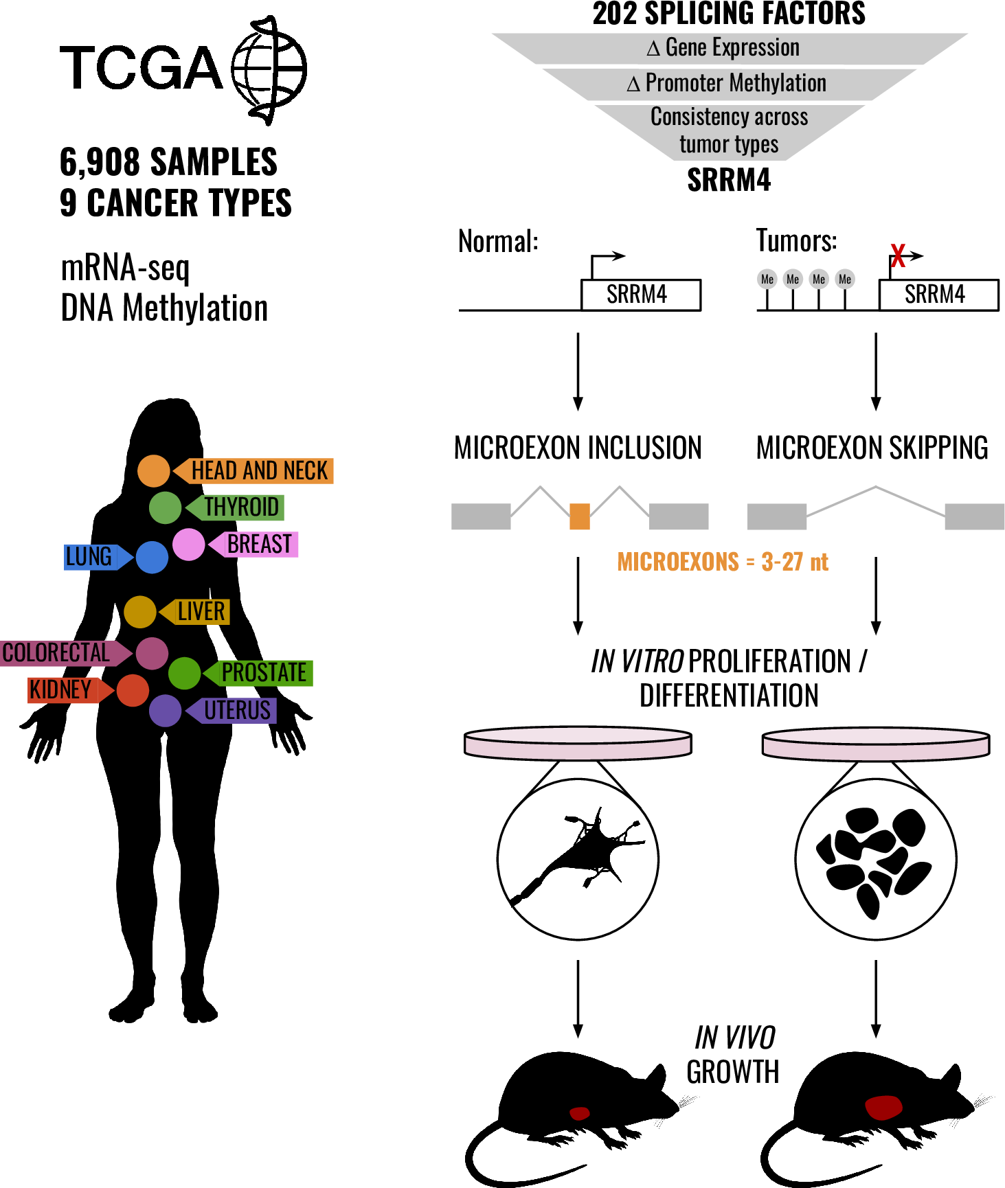 Silencing of SRRM4 suppresses microexon inclusion and promotes tumor growth across cancers